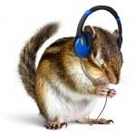 Постер, плакат: Funny chipmunk listening to music on headphones