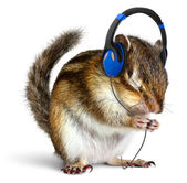 Funny chipmunk listening to music on headphones — Stock Photo
