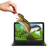 Hand feeds animal from laptop — Stock Photo