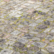 Old cobble stone street with moss — Stock Photo #10818482