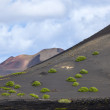 Stock Photo: Sparse vegetation in volcanic wine arelGeriin Lanzarote