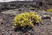 Wulkanicznym obszarze w lanzarote — Zdjęcie stockowe