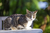 Cute cat relaxing on a wooden table in the garden — Stock Photo