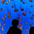 Watch the jelly fishes in the aquarium — Stock Photo