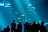 Watch the fishes in the aquarium — Stock Photo