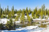 Nieve en el monte lassen en el parque nacional — Foto de Stock