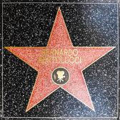 Bernardo Bertoluccis star on Hollywood Walk of Fame — Stock Photo