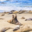 Sealions at the beach - 图库照片