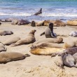Sealions at the beach - Stock Photo