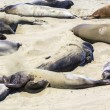 Sealions relax at the beach - Stock Photo