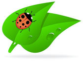 Ladybug on green leaf — Vettoriale Stock