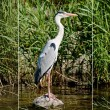 Gray Heron (Ardea cinerea) — Stock Photo #11245004