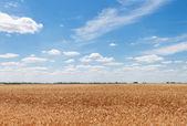 Beautiful countryside — Stock Photo