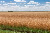 Vackra landsbygd — Stockfoto