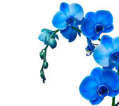 Flor da orquídea — Foto Stock
