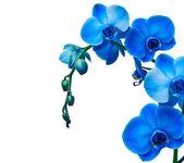 Orchidej květina — Stock fotografie