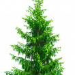Christmas tree — Stock Photo #11200284