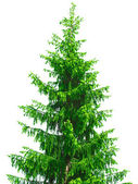 Christmas tree — Stock Photo