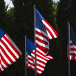 American Flags — Stockfoto