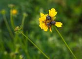 Plagas de insectos — Foto de Stock