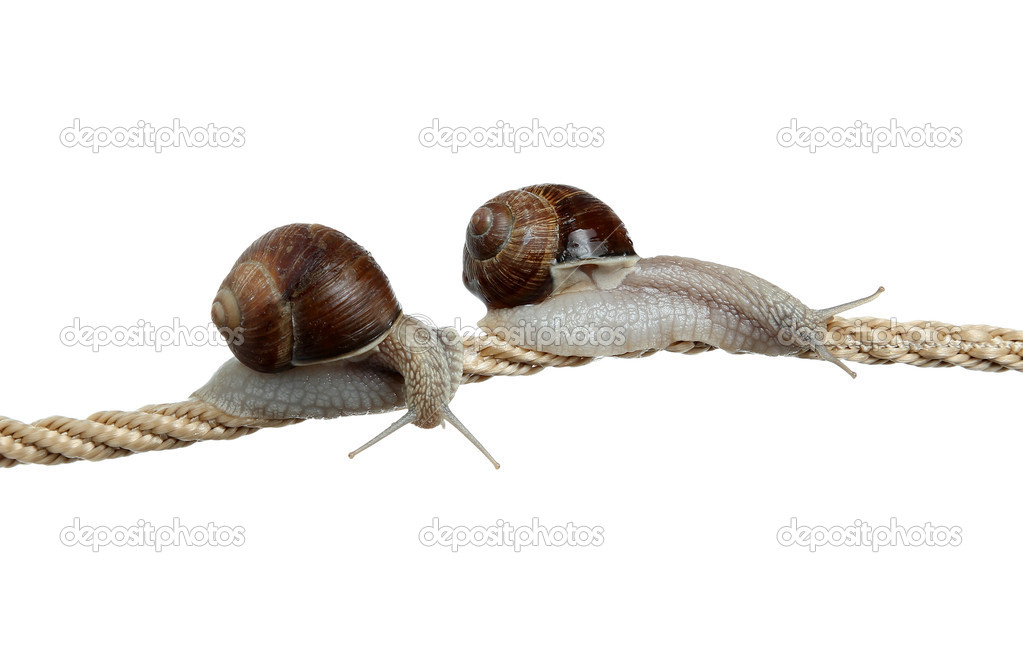 High-flying snails  Stock Photo #11075626