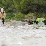 Wild horses — Stock Photo #11239757