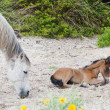 Foal and filly — Stock Photo