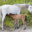 Stock Photo: Foal and filly