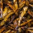 Fried anchovies - Stock Photo