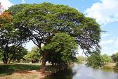 Tree at park — Stock Photo