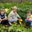 Stock Photo: Womwith children collects vegetable marrows