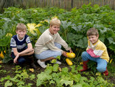 The woman with children collects vegetable marrows — Stock Photo