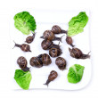 Snails on plate — Stock Photo #10989625
