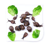 Snails on plate — Stock Photo