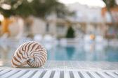 Nautilus shall at swimming pool edge, super shallow dof, hotel o — Stock Photo
