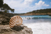 Nautilus seashell beach and Mediterranean sea — Stock Photo