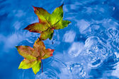 Fall leaves on the rain in a puddle — Stock Photo