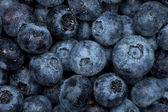 Blueberry watered background — Stock Photo