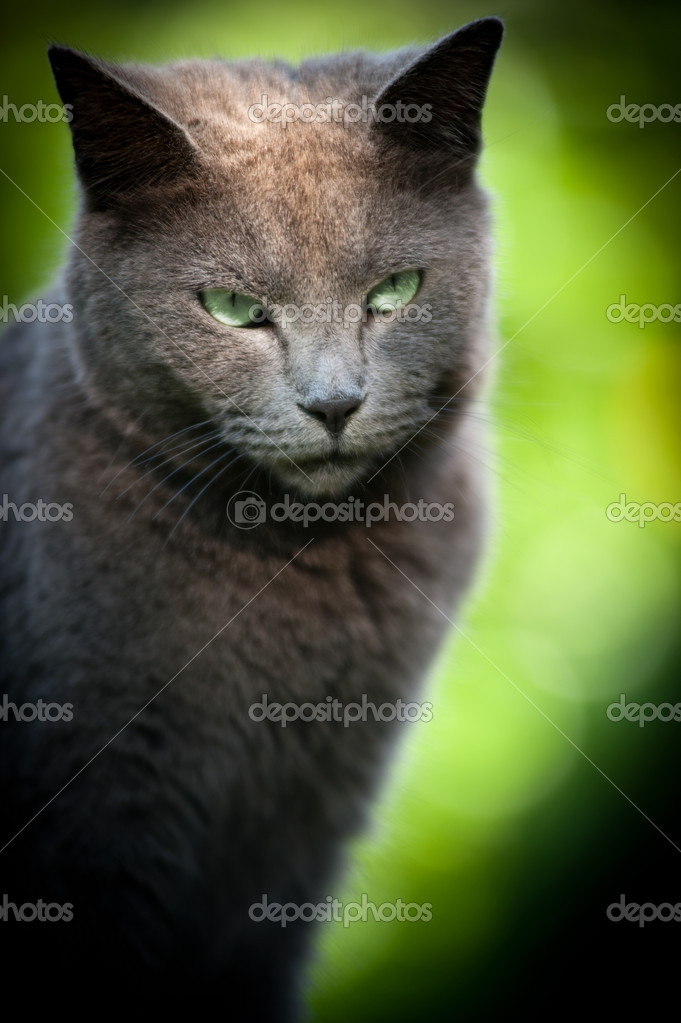 Portrait of a cat soft focused caught outside — Stock Photo #11090152