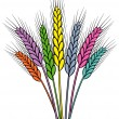 Vector colorful wheat ears — Stock Vector