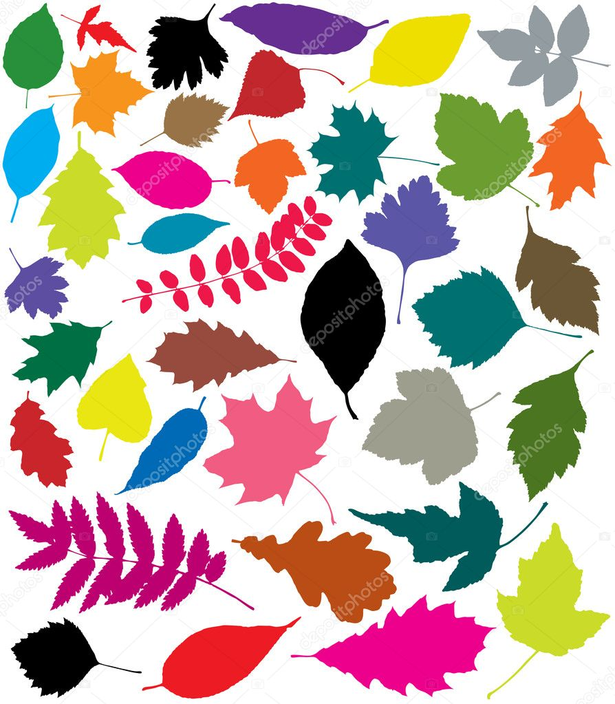 Vector colorful silhouettes of leaves — Stock Vector #11120328