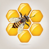 Vector working bee on honeycells — Stock Vector