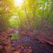 Stock Photo: Mountain Forest River at sunset