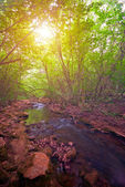 Mountain Forest River at sunset — Stock Photo
