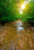 Ormanda sabah — Stok fotoğraf