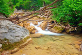 The wreckage of trees in a stream — Stock Photo