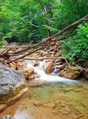 Wreckage of trees in a mountain forest river — Stock Photo