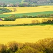 Rural landscape overlooking bright yellow fields of rapeseed - Stock Photo