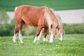 Farm horse in rural landscape in Spring — Stock Photo