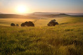 Summer sunrise over English countryside rural landscape — Stock Photo